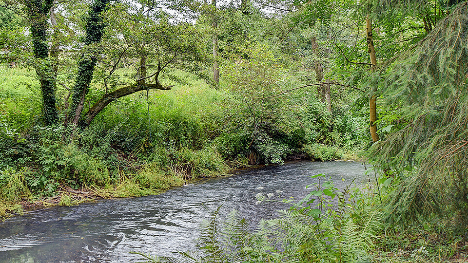 River Rother, Hampshire